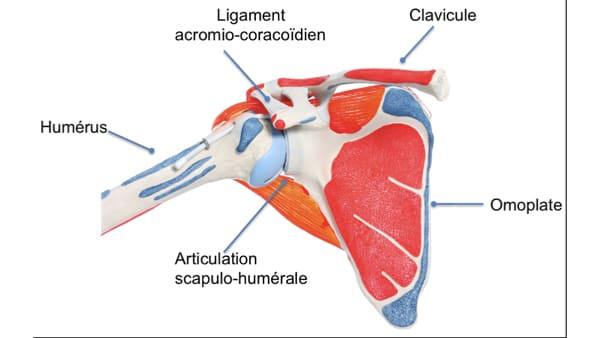 luxation epaule douleur nuit luxation epaule symptome luxation epaule douleur epaule chirurgien orthopedique paris chirurgien de l epaule chirurgien du coude